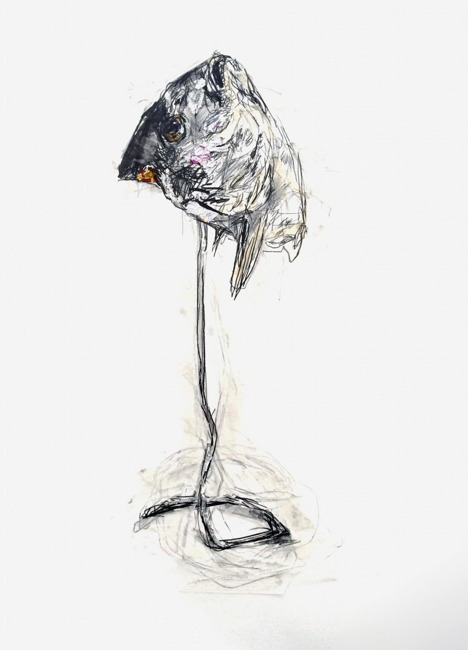 dessin-poisson-laurent-esquerre-3
